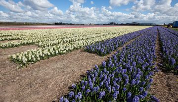 Four plants selected as promising suppliers of natural cosmetics