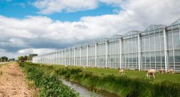 Belgian greenhouse horticulturists study Dutch geothermal wells