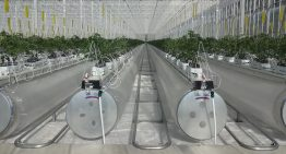 Kubo to supply turnkey Ultra Clima greenhouse in China
