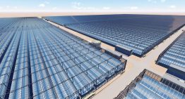 Kubo to build 190 hectares of solar greenhouses in Oman