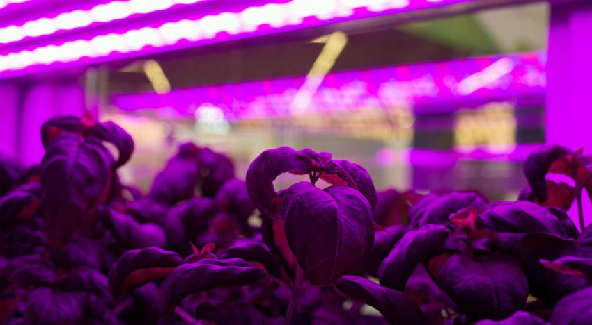 'We can still learn a lot from vertical farming systems'