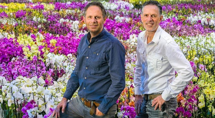 Perfect climate for orchid cultivation and sales chances are good