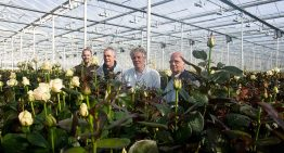 'In the greenhouse temperature differences not easy to solve'
