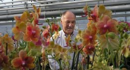 Understanding photosynthesis important for CO2 dosing and lighting