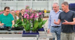 Targeted fertilisation enables extra recirculation in pot orchids