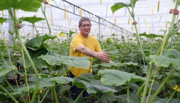 Cucumber grower takes quantum leap with Next Generation Growing