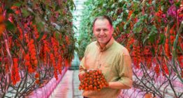 'LED is greatest horticultural innovation since the invention of the tractor'