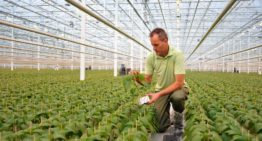Propagator makes optimal use of raw materials at new site