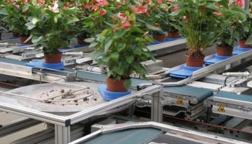 Movement and touch make plants shorter