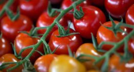 More greenhouse vegetables but fewer ornamental plants grown in the Netherlands