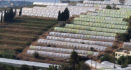Strengthening the Lebanese horticulture sector
