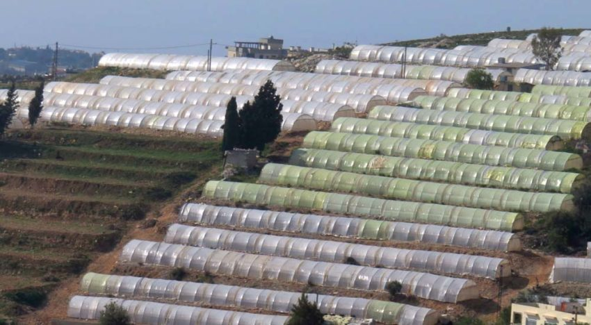 WUR innovative horticultural greenhouse increases water efficiency in Lebanon