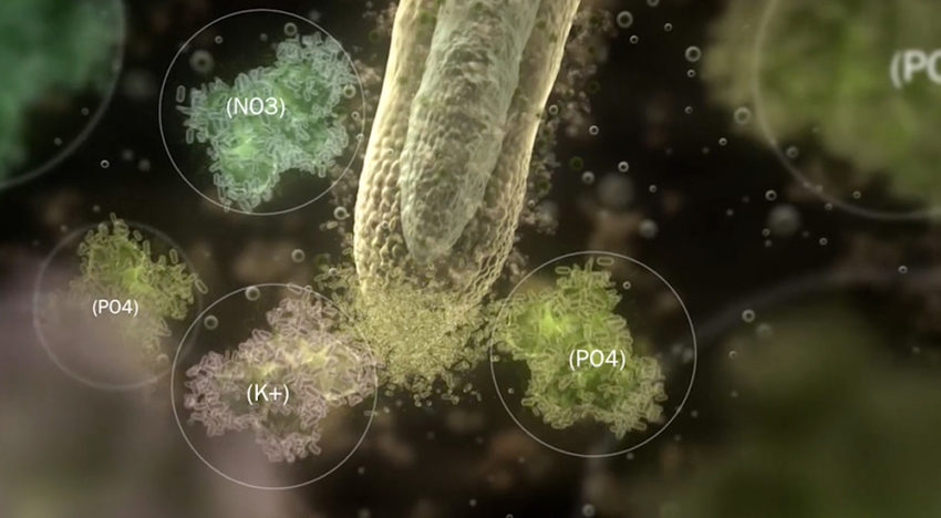 Plant Health Cure presents explanatory video about root growth
