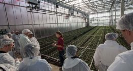 Two-day excursion to innovative Dutch greenhouses