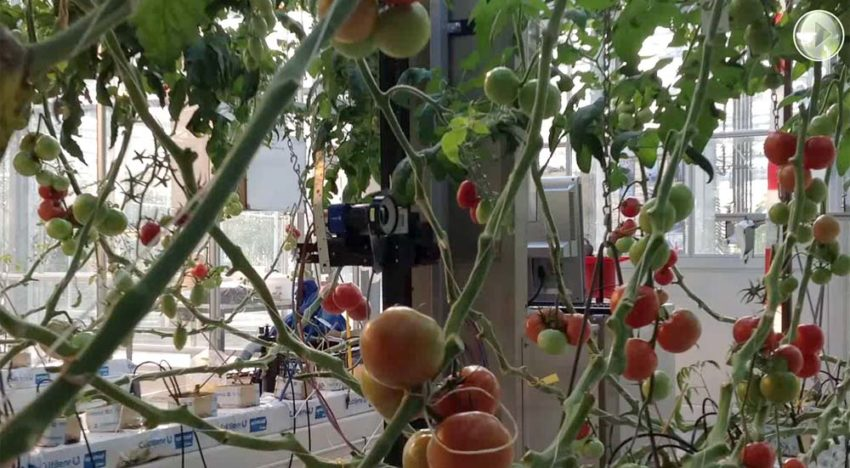 Precision Horticulture Programme focuses on plant level