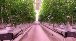 First 'daylight-less' crops are being grown at the Certhon Innovation Centre