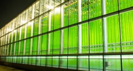 Eparella opens one of world's biggest algae greenhouses in Austria