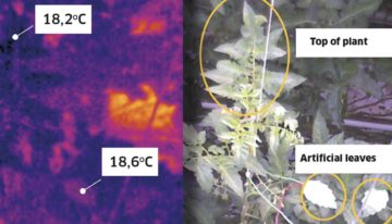 Intensive screening promotes transpiration from the top