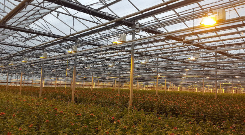Direct Current highly promising alternative in horticulture