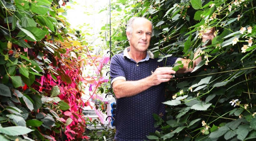"""Researchers """"grow"""" model of ideal plant in simulated greenhouse"""