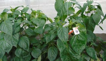 Crop protection products much more effective with adjuvants