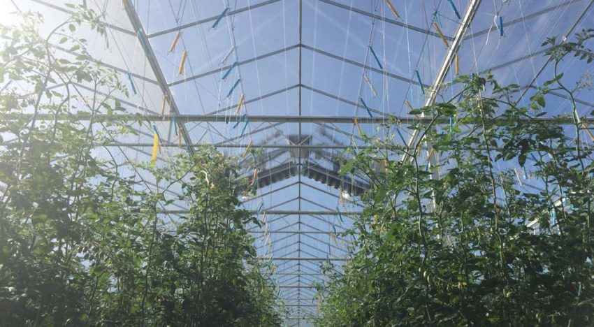 Cleaning greenhouse glass regularly should be a no-brainer