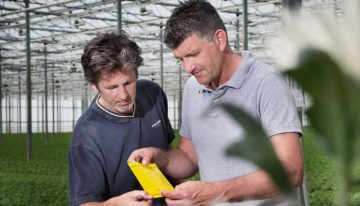 Chrysanthemum growers finally get thrips control back on track