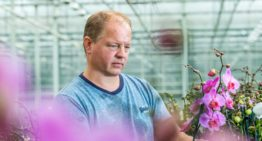 """Knowledge of soil organisms is key in ideal potting mixture"""