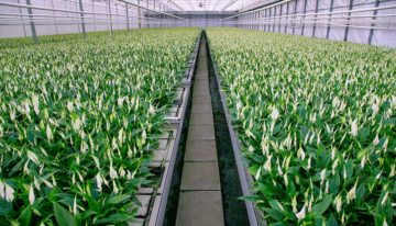 When each leaf counts, leaf samples can point to plant's needs