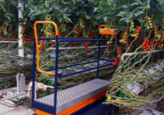The Plantalyzer automatically measures the tomatoes in the greenhouse