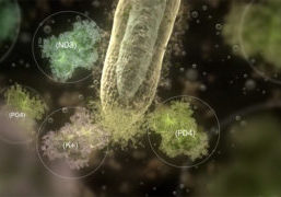 Soil is a living organism is the title of a new 12-minute explanatory video by Plant Health Cure