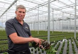 Rainbow Greenhouses in Canada is a privately owned wholesale grower and distributor of high-quality potted plants.