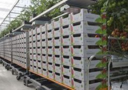Gridmap is the new technology for moving your harvest trolley in the greenhouse without rails. Now, for the first time, a harvest trolley can move around a greenhouse entirely without rails in the concrete floor or processing area.