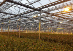 The use of Direct Current in greenhouse horticulture appears to be a very promising alternative. A pilot in the greenhouse horticulture sector demonstrated a positive business case for the use of Direct Current (DC) for greater durability of components, as well as cost and material savings.