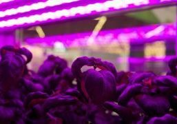 Interest in vertical farming (VF) is growing worldwide but the standard greenhouse still has plenty of room for development, according to Jasper den Besten.